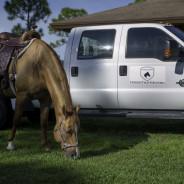 Horses that help-17