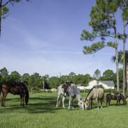Horses that help-22