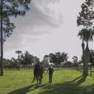 Horses that help-24
