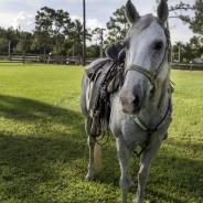 Horses that help-25